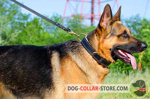 Padded Leather German Shepherd Collar With Brass Fittings