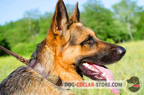 Stylish Leather Dog Collar for German Shepherd with Brass Plates