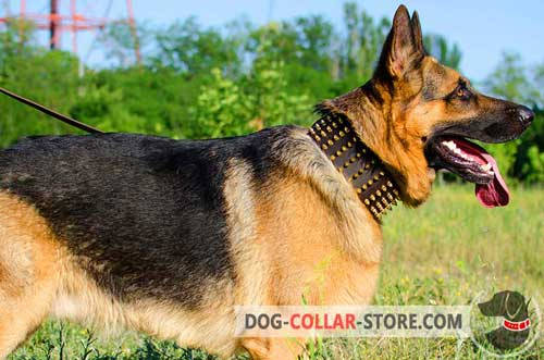 Handmade Spiked Design Leather German Shepherd Collar