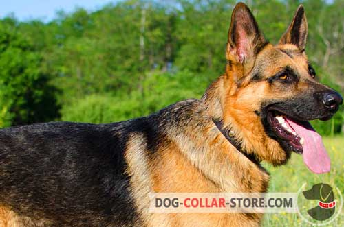 Strong Nylon German Shepherd Collar for Any Weather
