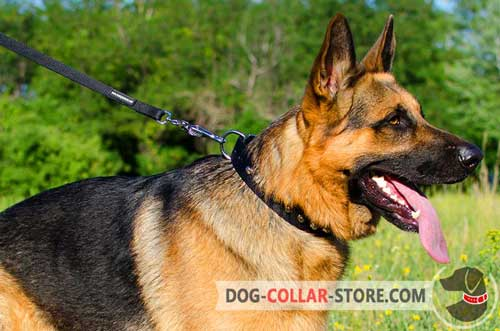 Super Durable Nylon German Shepherd Collar With Nickel Pyramids