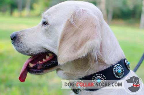 Leather Dog Collar for Golden Retriever Decorated with Blue Stoned Circles