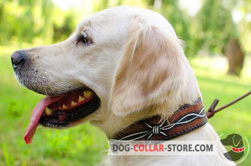 Designer Leather Golden Retriever Collar with Painted Barbed Wire