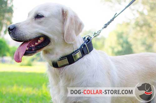 Fashion Leather Dog Collar for Golden Retriever Adorned with Nickel Plates