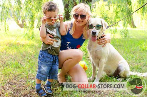 Strong Leather Golden Retriever Collar With Decoration
