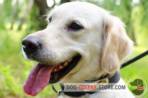 Multifunctional Nylon Golden Retriever Collar With Metal ID Tag