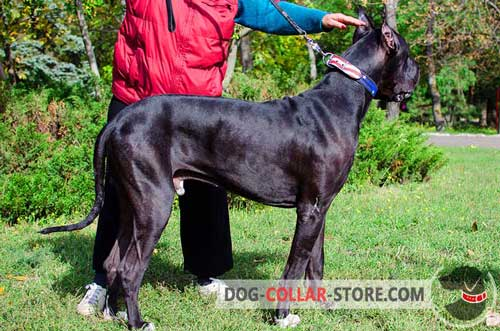 Leather Great Dane Collar With Hand Painted American Flag