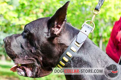 Fashion Adjustable Leather Great Dane Collar with Vertical Brass Plates