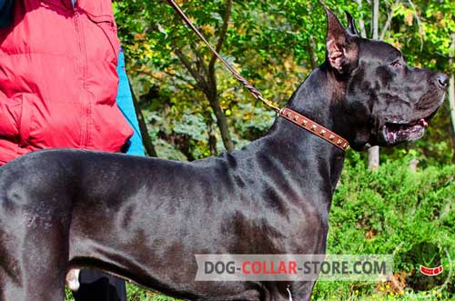 Everyday Leather Great Dane Collar with Decorations