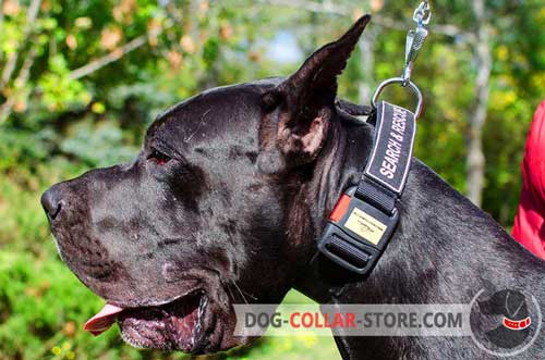 Easily Adjustable Nylon Dog Collar for Great Dane Walking