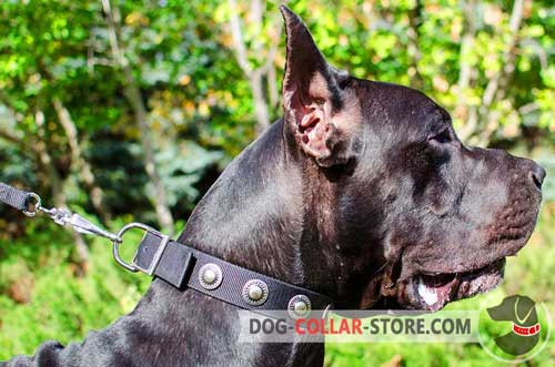 Wide Nylon Great Dane Collar with Vintage Silver Plated Circles
