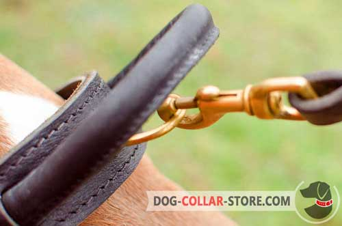 Round Handle and Brass Plated D-ring on Training Leather Dog Collar