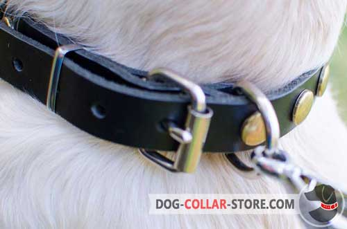 Strong Nickel Plated Hardware On Leather Dog Collar