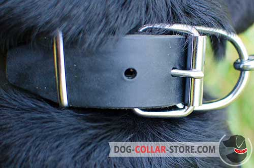 Reliable Steel Nickel Plated Hardware on Plated Leather Dog Collar
