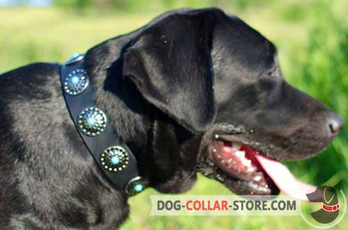 Walking Leather Labrador Collar With Blue Stones