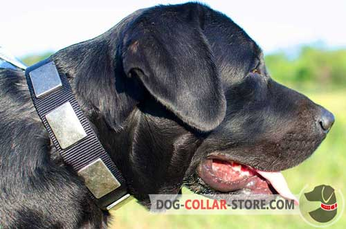 Stunning Nylon Dog Collar With Plates For Labrador