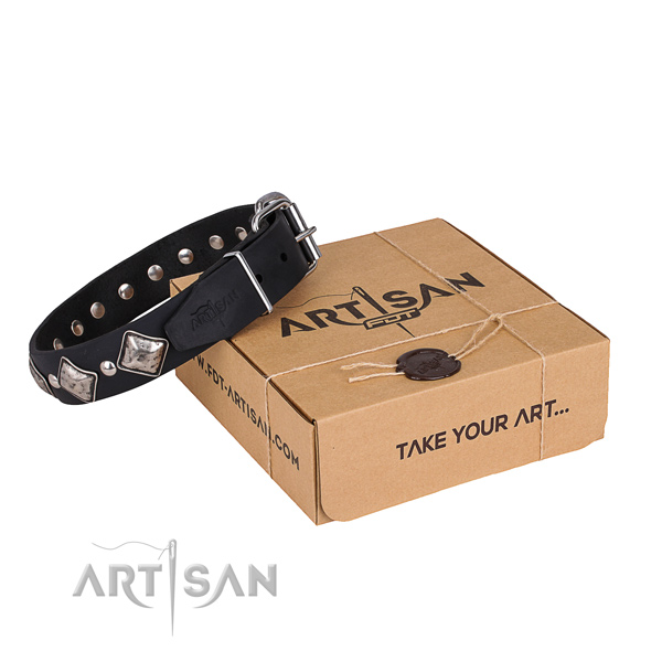 Day-to-day leather dog collar with astounding studs