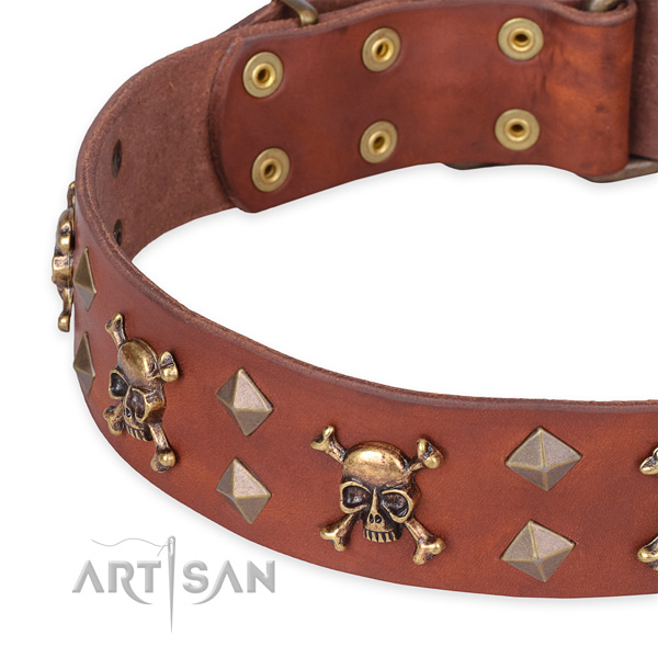 Daily leather dog collar with sensational embellishments