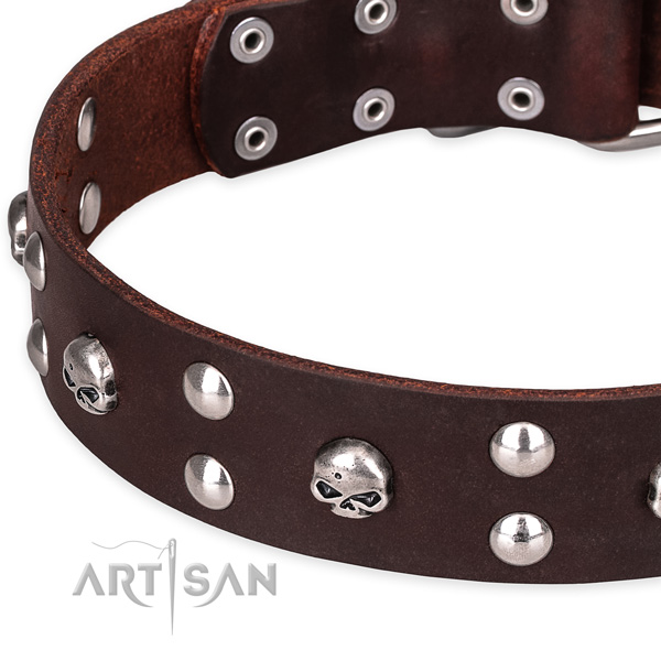 Casual leather dog collar with stunning studs