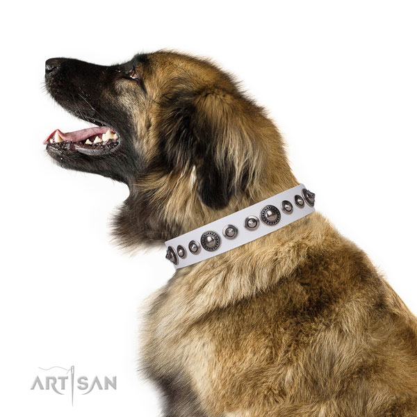 Unusual studded genuine leather dog collar for stylish walking