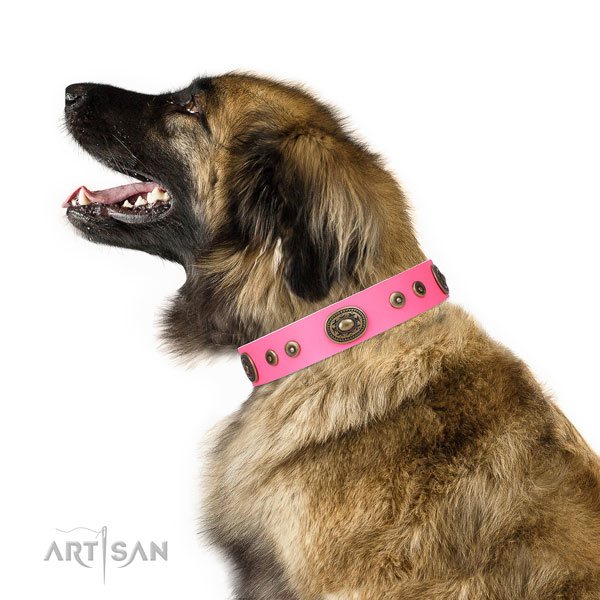 Stunning decorated natural leather dog collar for stylish walking