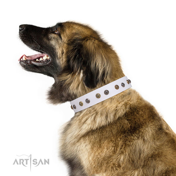 Walking embellished dog collar made of quality genuine leather