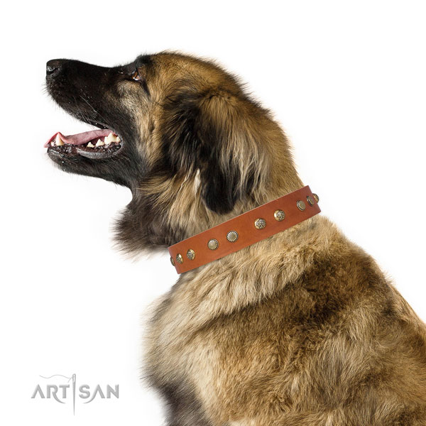 Stylish design embellishments on everyday walking leather dog collar