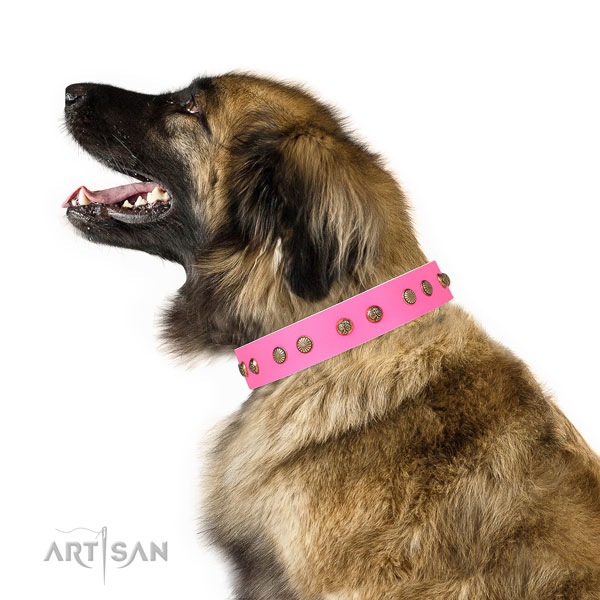 Fashionable adornments on daily use full grain natural leather dog collar
