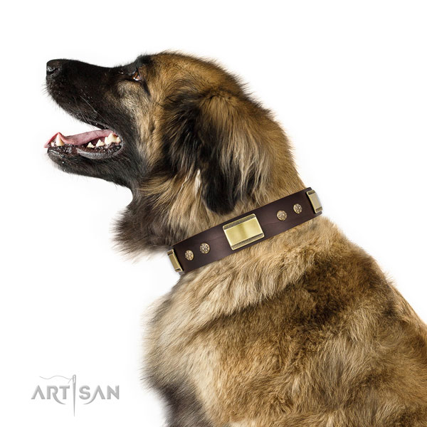 Everyday use dog collar of genuine leather with top notch studs
