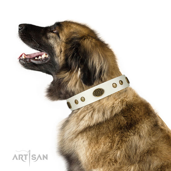 Reliable fittings on leather dog collar for stylish walking