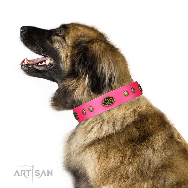 Corrosion proof fittings on full grain leather dog collar for easy wearing