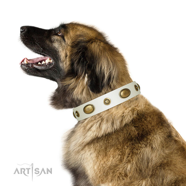 Daily walking dog collar of natural leather with fashionable adornments