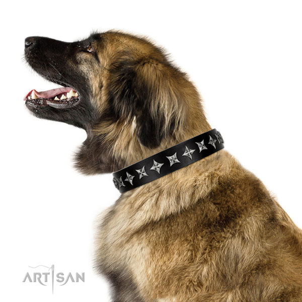 Daily use decorated dog collar of finest quality leather