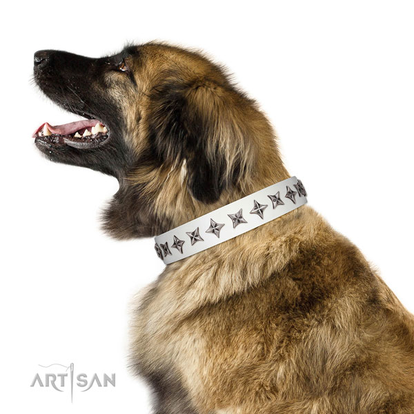 Durable leather dog collar with trendy studs