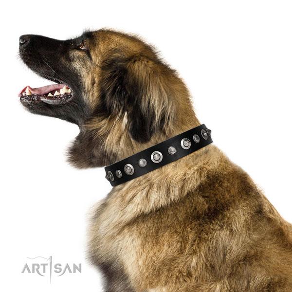 Finest quality genuine leather dog collar with inimitable adornments
