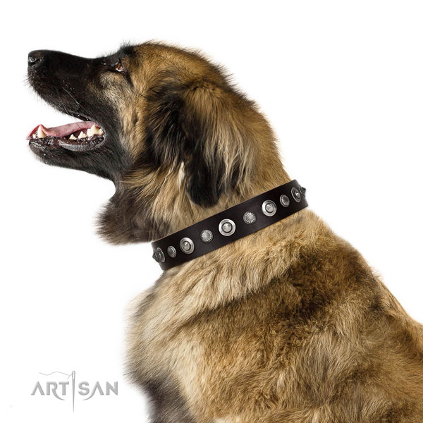 Quality full grain natural leather dog collar with impressive embellishments