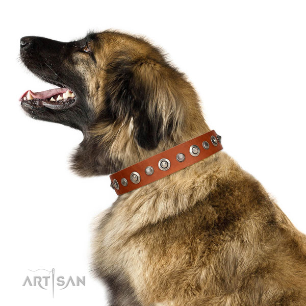 Quality leather dog collar with fashionable embellishments