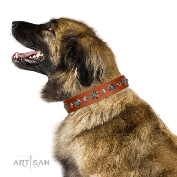 Extraordinary genuine leather dog collar with corrosion resistant fittings