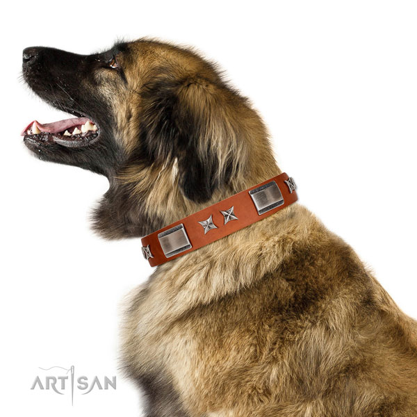 Comfortable wearing quality leather dog collar with embellishments