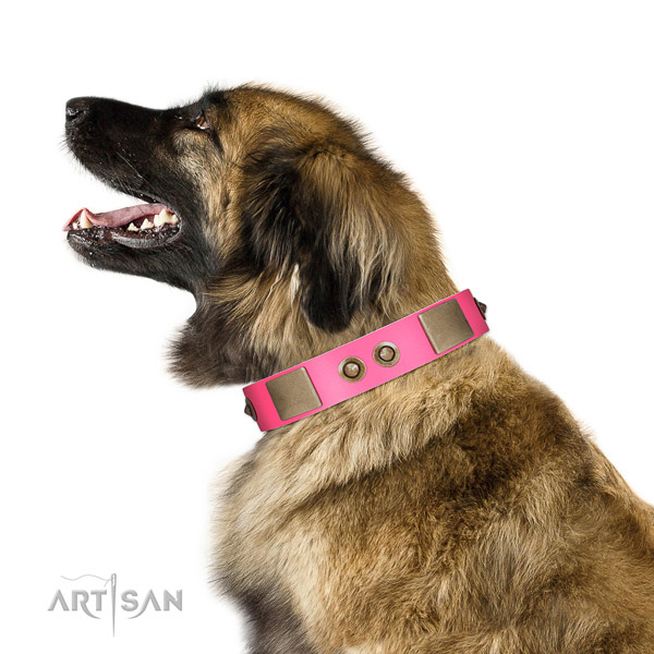 Everyday use dog collar of genuine leather with trendy studs