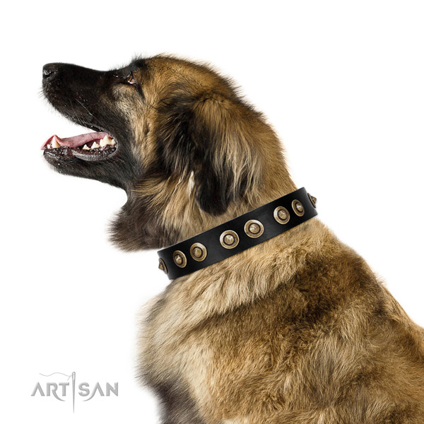 Handy use dog collar of leather with significant embellishments