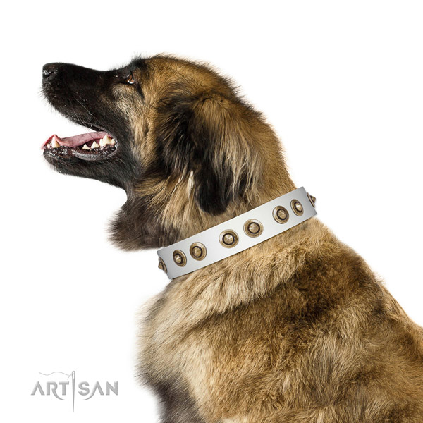Everyday walking dog collar of natural leather with exquisite adornments