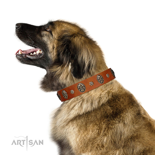 Comfy wearing dog collar of leather with impressive embellishments