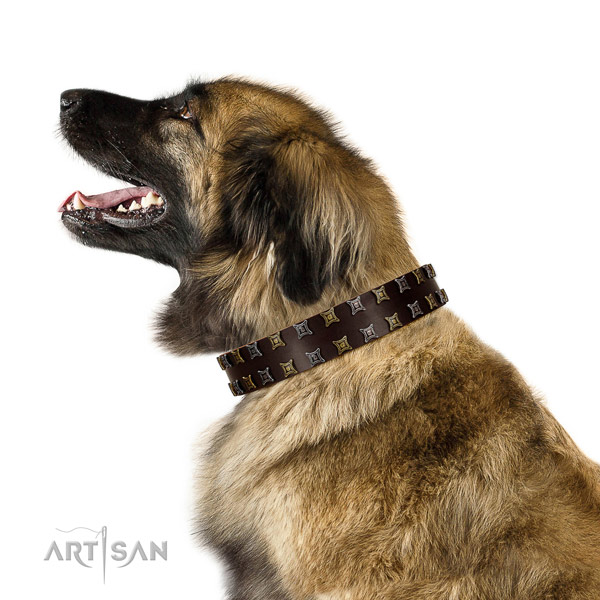 Strong full grain natural leather dog collar with decorations for your doggie