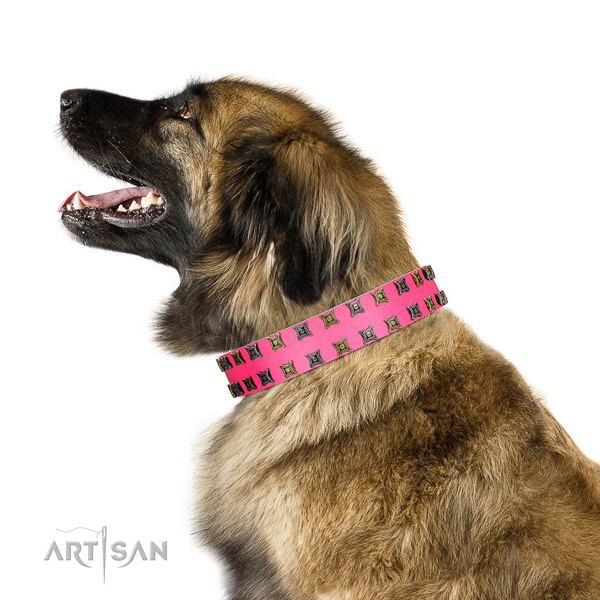 Top notch natural leather dog collar with embellishments for your four-legged friend