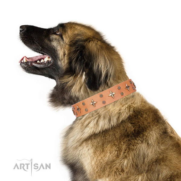 Leonberger full grain leather dog collar for daily use