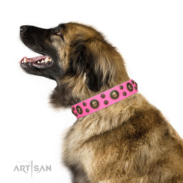 Leonberger full grain natural leather dog collar for everyday walking