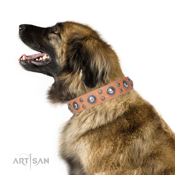 Leonberger genuine leather dog collar for comfy wearing