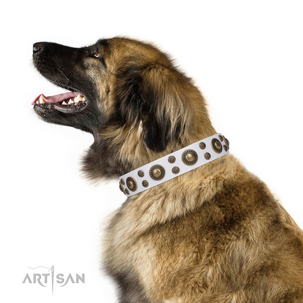 Leonberger full grain natural leather dog collar for daily use