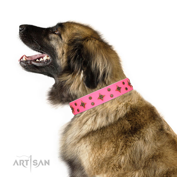 Leonberger genuine leather dog collar for everyday use